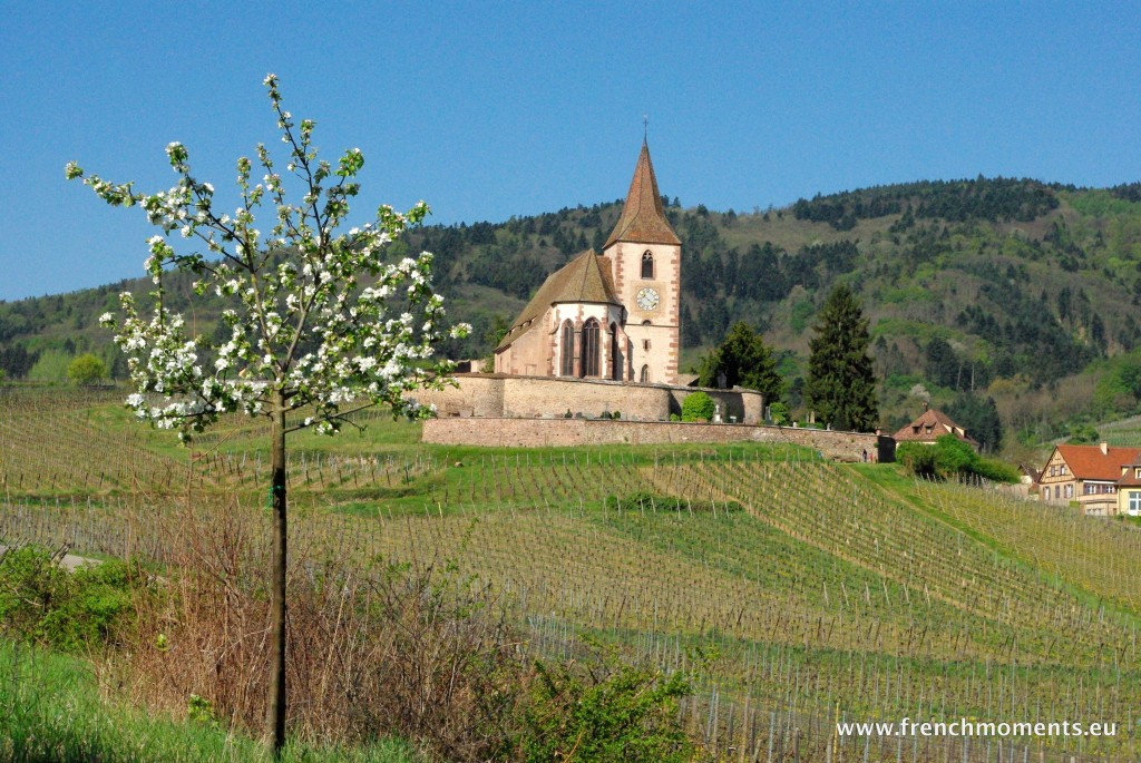 L'église d'Hunawihr au milieu du vignoble d'Alsace © French Moments