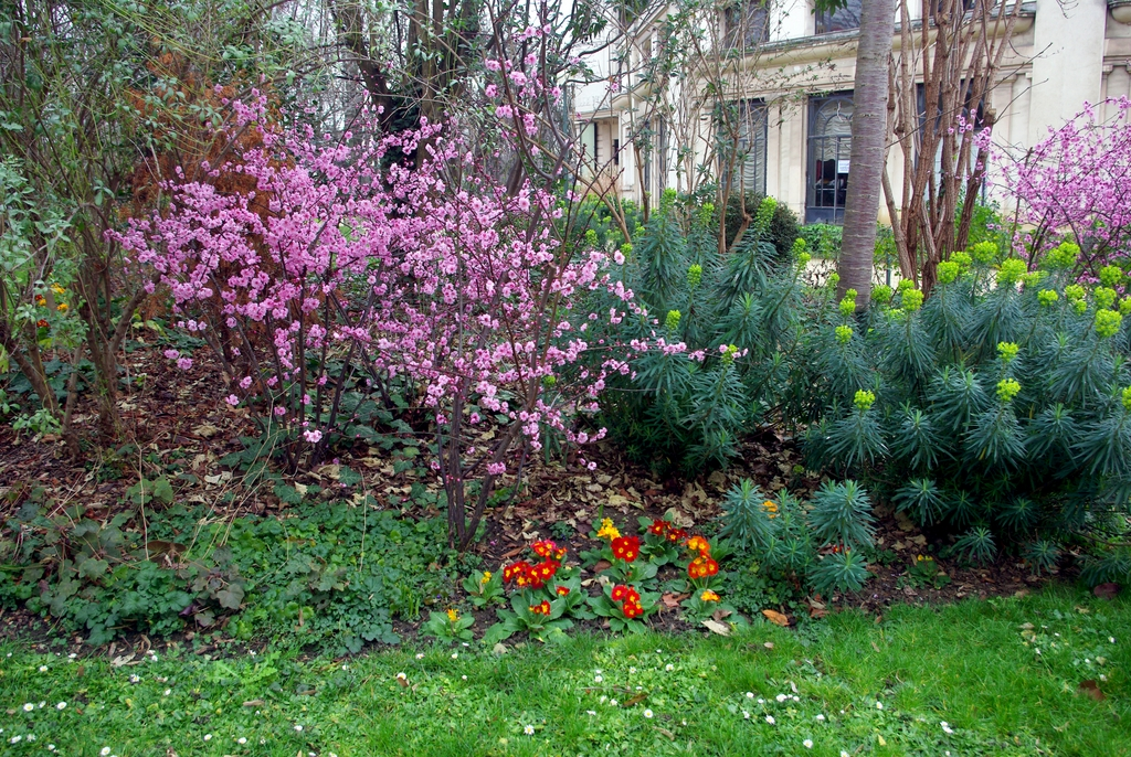 Spring in February in Paris - Jardins des Champs-Elysees 04 © French Moments