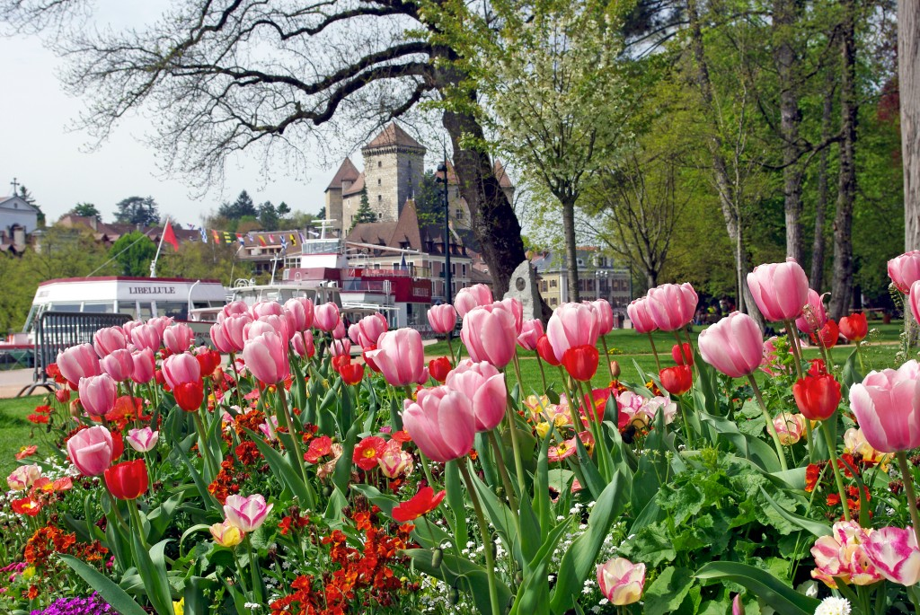 Tulips in Annecy © French Moments