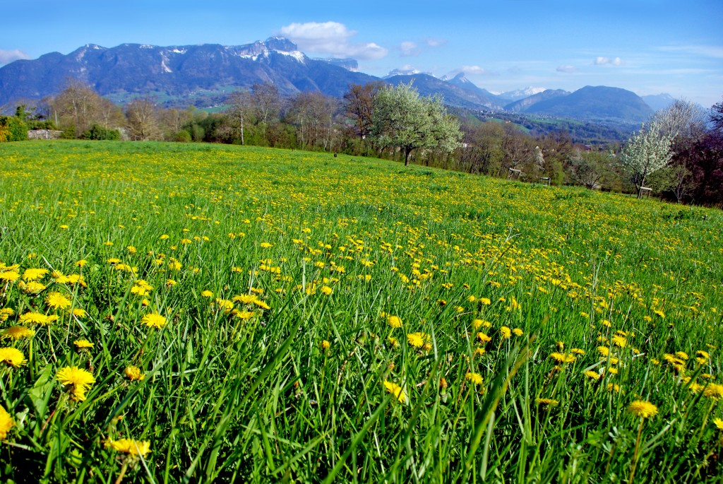 Field in Groisy Haute-Savoie © French Moments